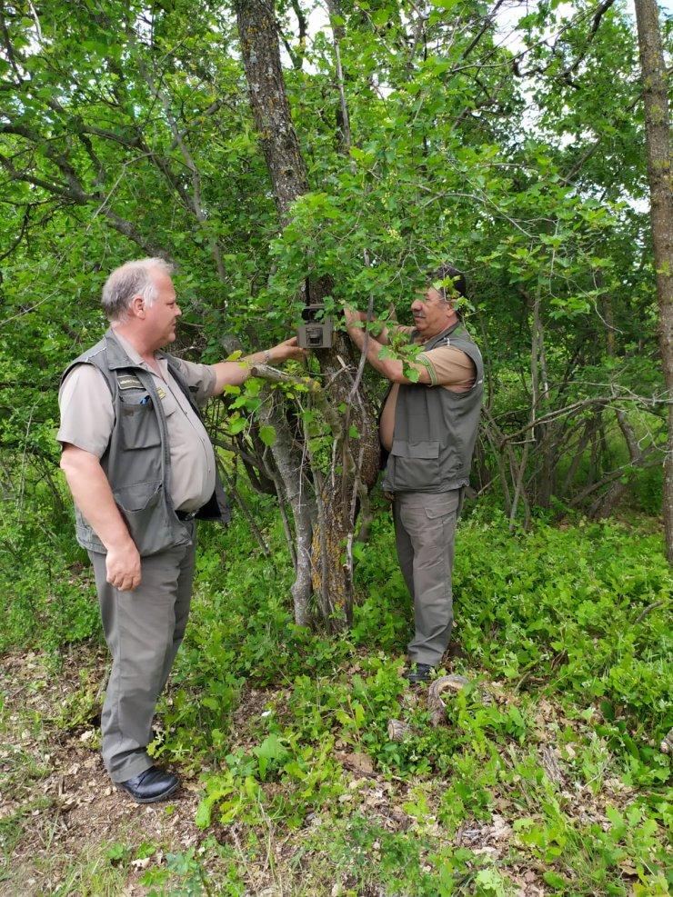 Edirne'deki ormanların korunmasına fotokapan desteği