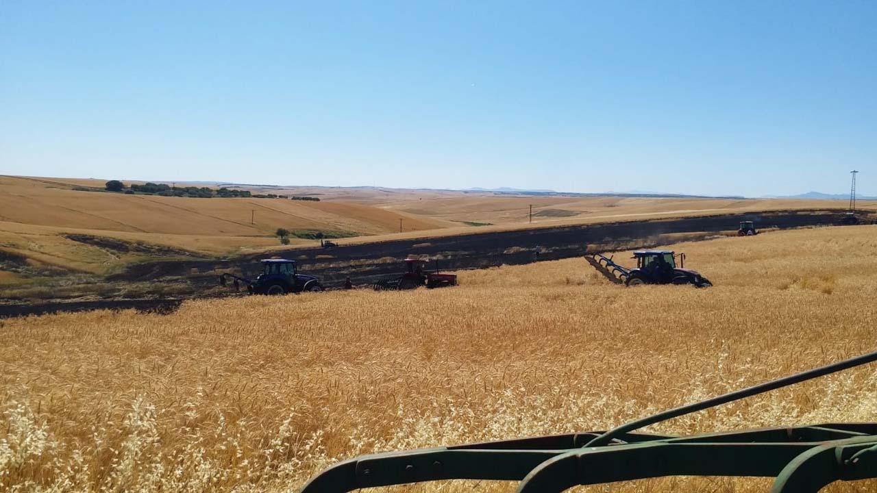 Elektrik direğinden çıkan kıvılcım, 50 dönüm ekili arazi küle döndürdü!