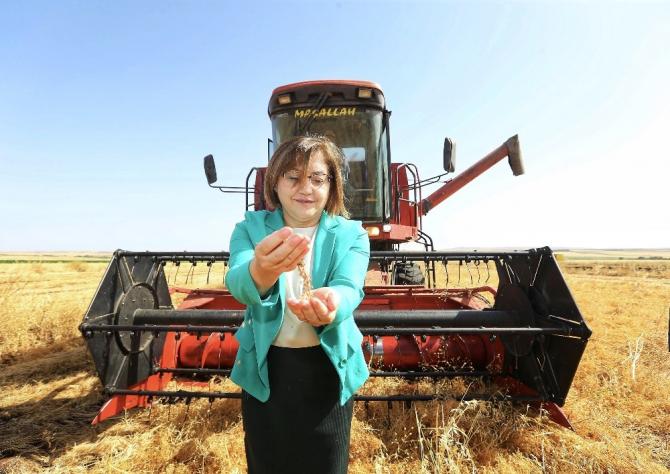 Gaziantep'te mercimek hasadı
