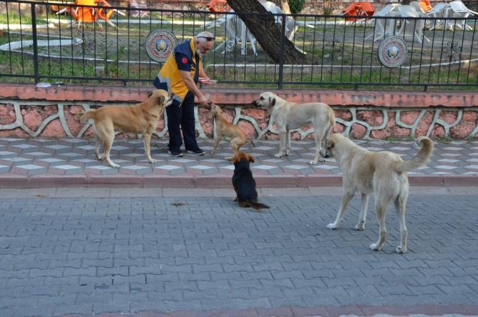 Sokak hayvanları onun gelmesini dört gözle bekliyor