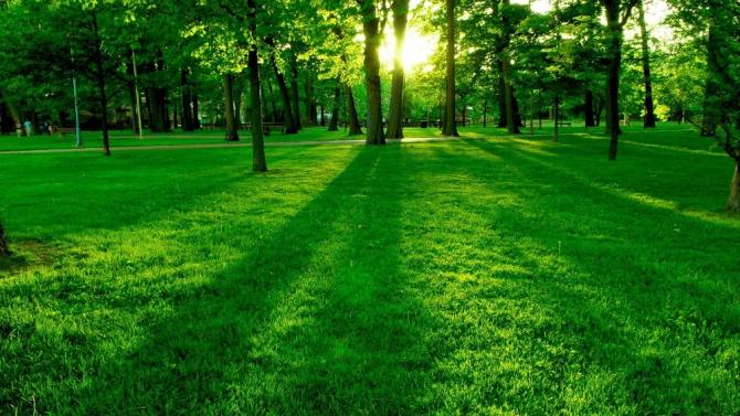 """Yaşam Ayavefe: """"Her karış toprağa bir ağaç ekeceğiz"""""""