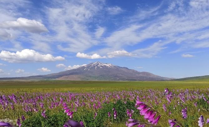 Çiçeklerle renklenen Sütey Yaylası ve Süphan Dağı'nın manzarası hayran bırakıyor
