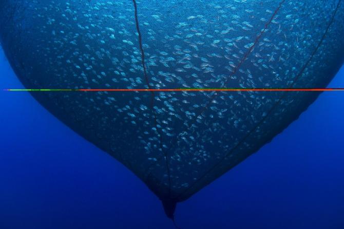 Balığın en güzel halini fotoğraflayanlar ödüle kavuştu