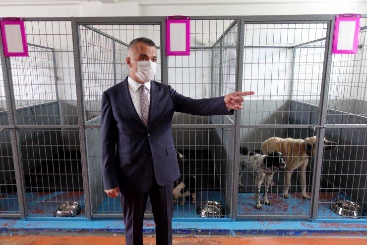 Kırklareli'nde sokak hayvanlarına çip takılacak