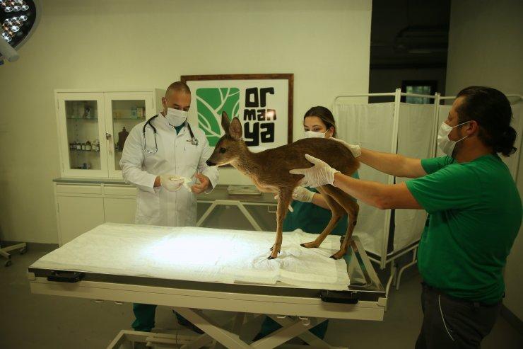 Yaralı yaban hayvanları Ormanya'da hem şifa hem yaşam alanı buluyor
