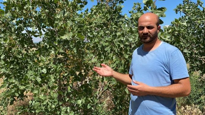 Genç öğretmen, Aralık rüzgar erozyonunda Antep fıstığı yetiştirdi