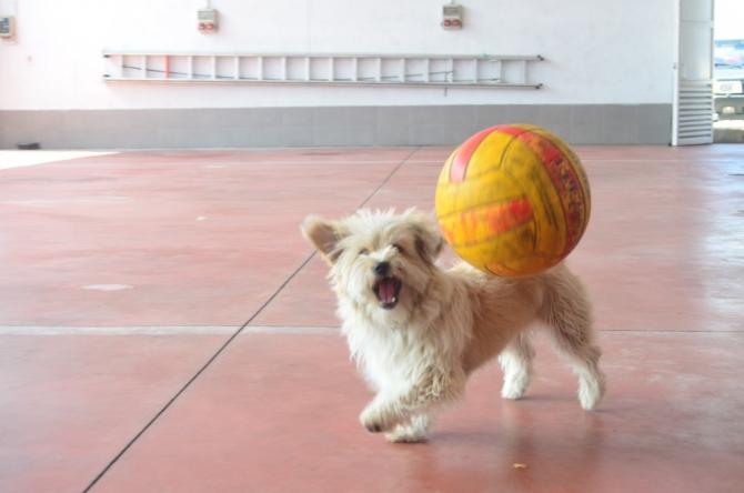 "İtfaiyenin maskotu sevimli köpek ""Leydi"""