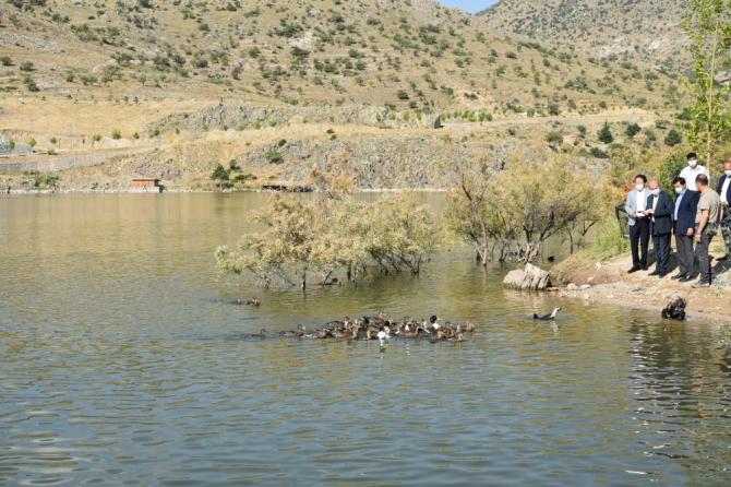 Sille Barajı göçmen kuşlara ev sahipliği yapıyor