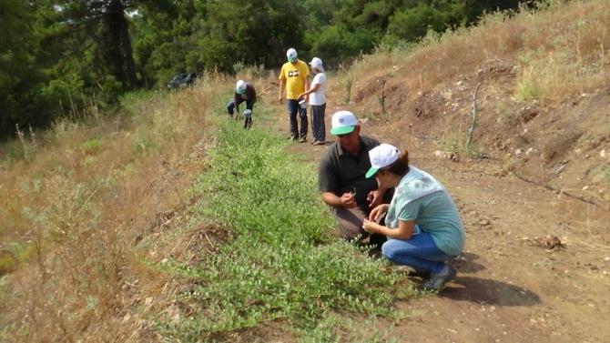 Değersiz diye arazilerden söktükleri bitkinin kilosu 2.5 Euro