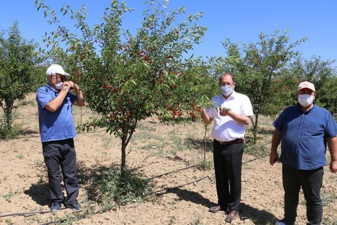Erzincan'da sanayi meyveciliğine yatırımlar sürüyor