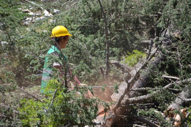 """Akduman: """"2020'de yerel orman köylülerimize 34 milyon lira ödeme yapacağız"""""""
