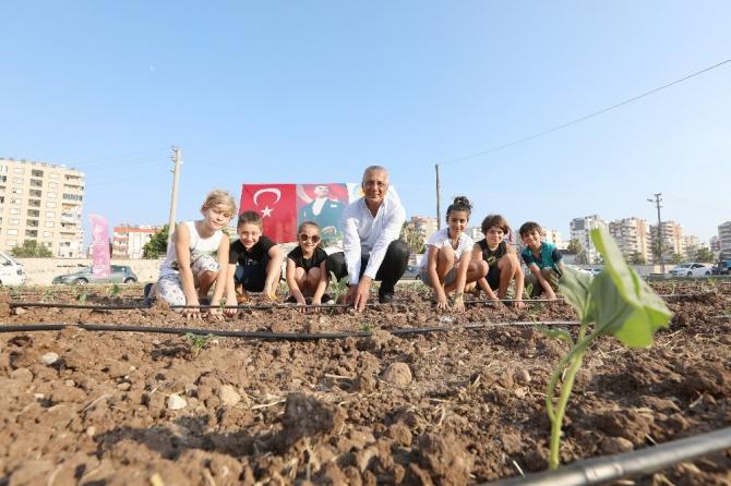 Mersin'de şehir manzaralı biberiye ve sebze tarlası