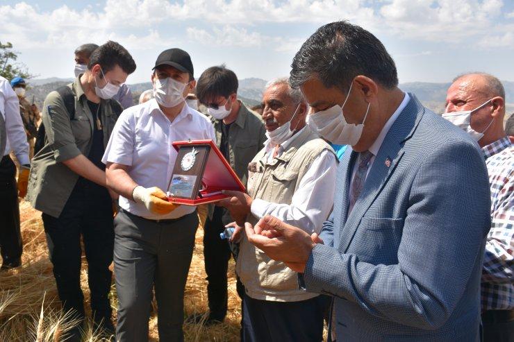 Şırnak'ta engebeli arazilerde orakla buğday hasadı başladı