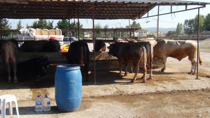 Bursa'da kurbanlıklar pazara indi