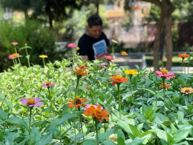 Yaz tatili dinlemediler, okullarını botanik bahçeye çevirdiler