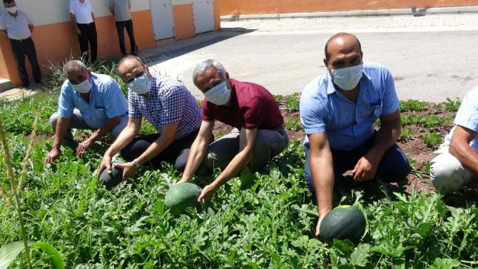Okul bahçesine öğrenciler ekti, öğretmenler hasat etti