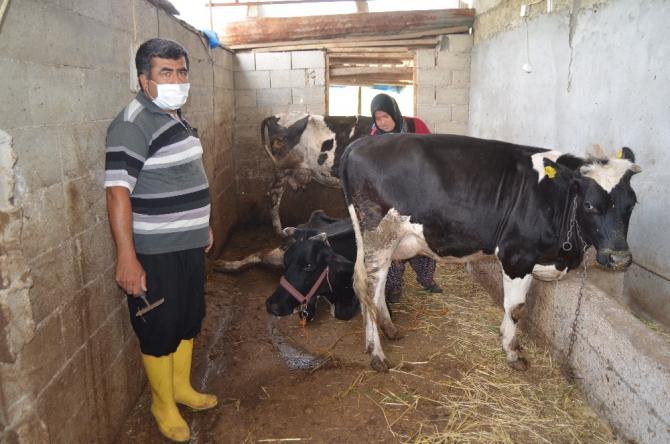 Engelli vatandaş, İŞKUR desteğiyle hayvancılık yapmaya başladı