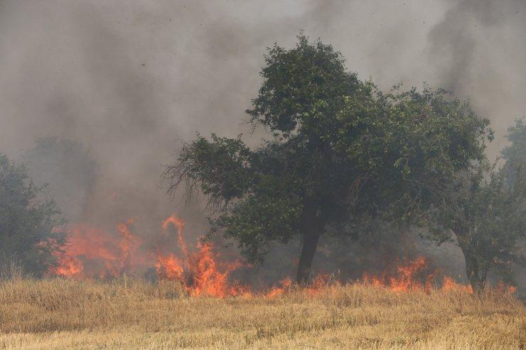 1500 paket saman ile 1000 dekar alan çıkan yangında küle döndü