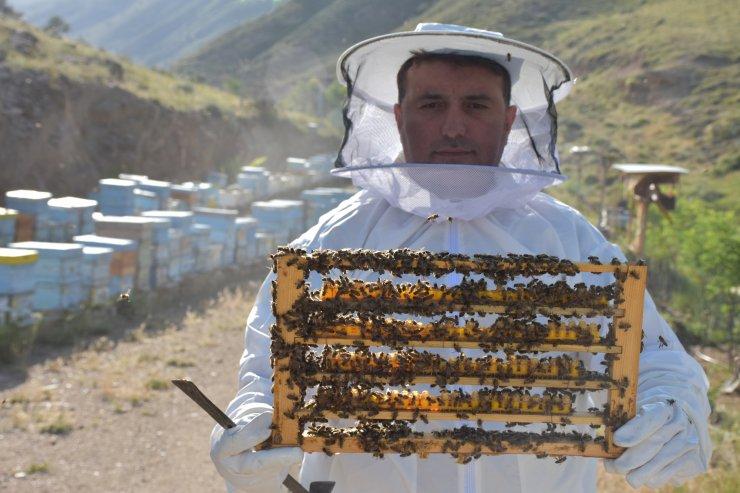 Arı sütünün kilosu 7 bin TL'den alıcı buluyor