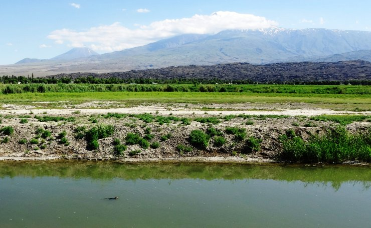 Iğdır'da çiftliklerden kaçan su maymunları doğal yaşama uyum sağladı