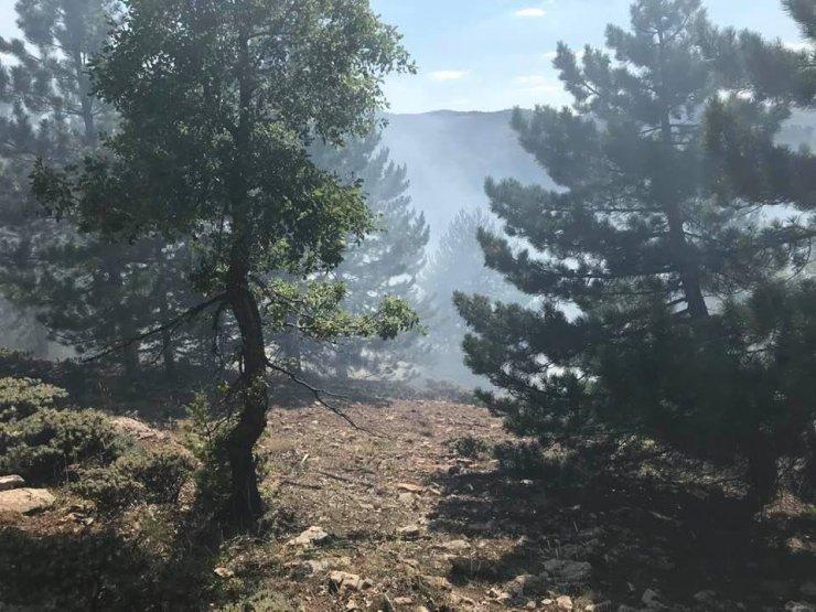 Ormanlık alanda çıkan yangında 2 hektarlık alan zarar gördü