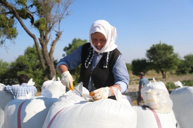 Türkiye'nin kekik üretim merkezinde lavantalar da yerini almaya başladı
