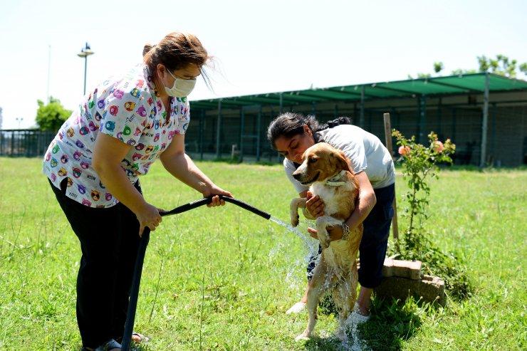 Antalya'da, hayvanlara sulu serinlik