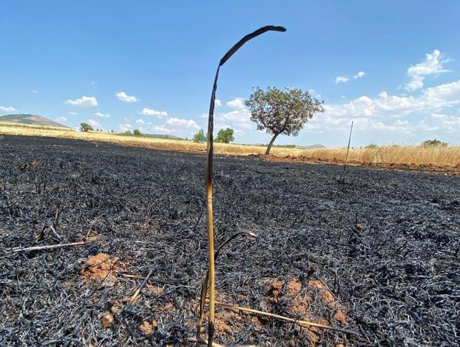 Ekin yangınında mahsuller zarar gördü