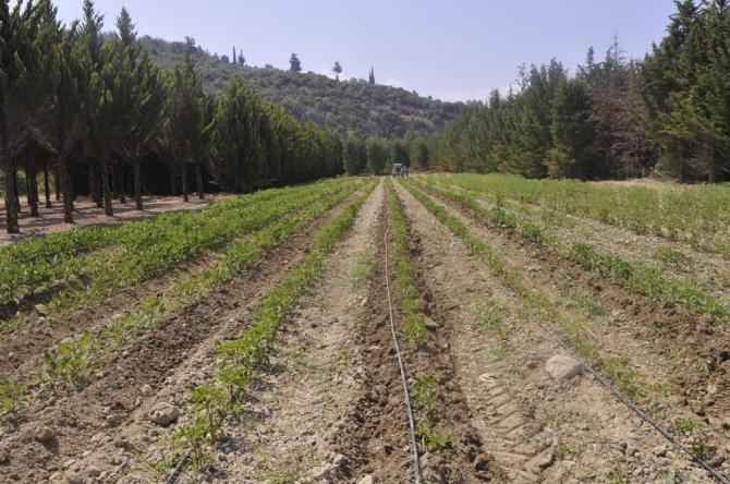 Adabahçe projesinde hasat vakti başlıyor