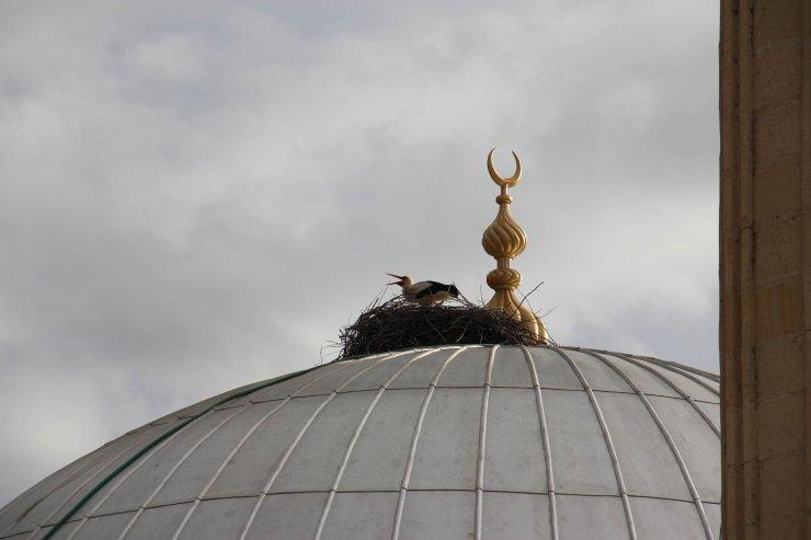 Bayburt'un 'Vefalı' leyleği 18 yıldır kubbeden ayrılmıyor