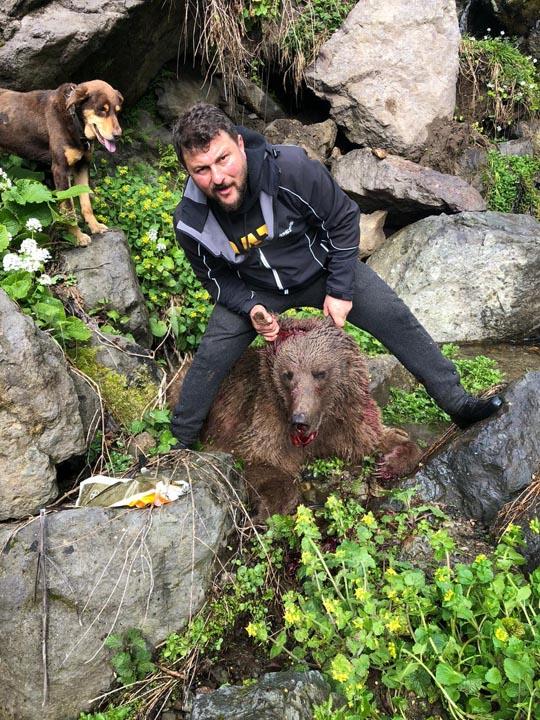 Can çekişen ayıyı köpeklerine parçalatan şahıs gözaltına alındı