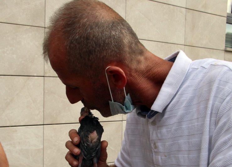 Karakol bahçesine düşen yavru güvercini, ağzıyla besledi