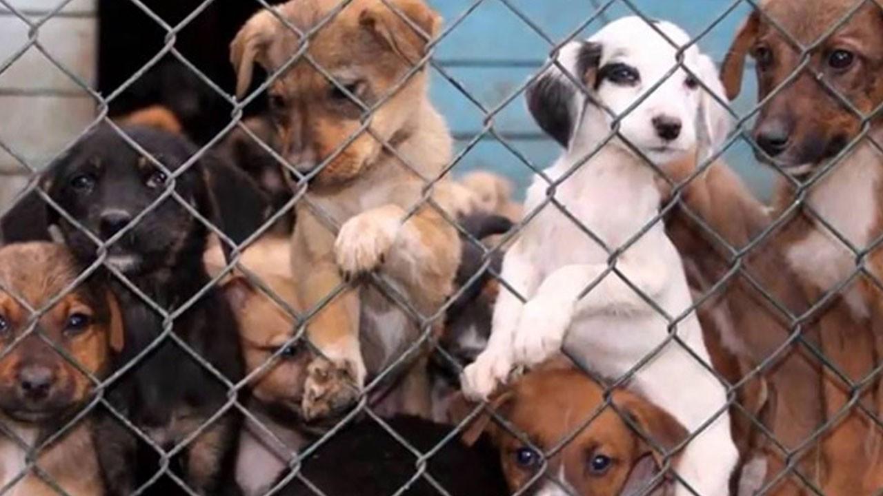 Hayvan hakları yasası nedir? Ne işe yarar?