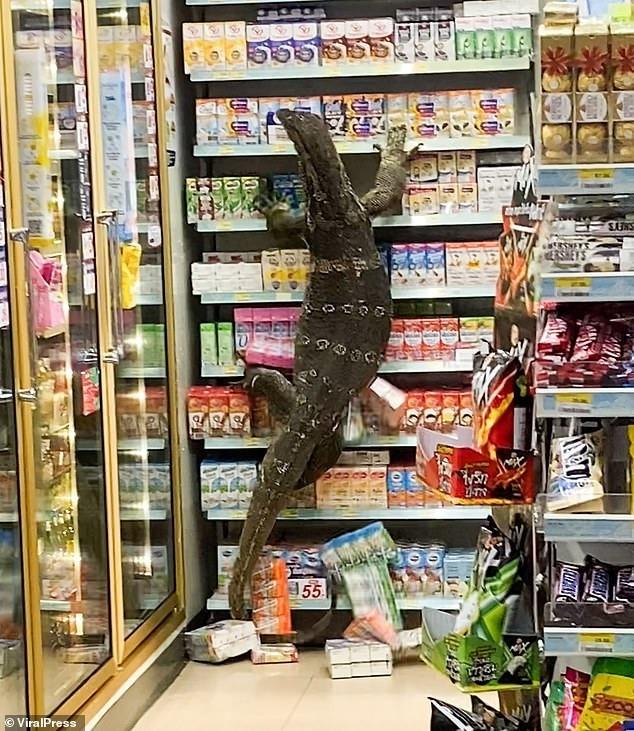 Dev kertenkele markete girdi Korku dolu anlar kameralara yansıdı