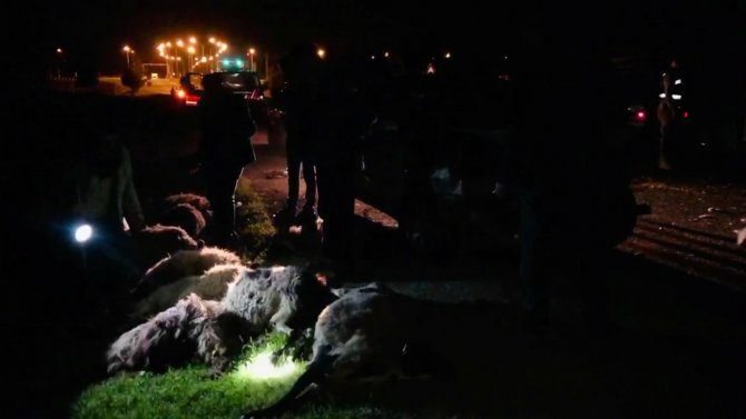 Ceylanpınar'da feci kaza! Koyun sürüsün arasına daldı!