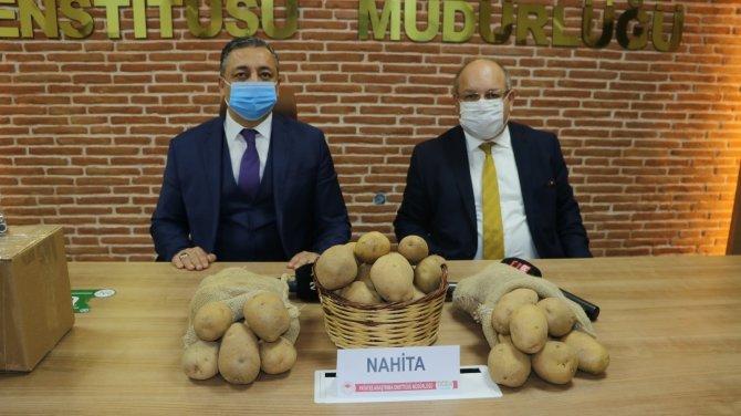 Niğde'nin yerli patatesi Nahita Avrupa yolunda! Hollanda'ya gönderiliyor