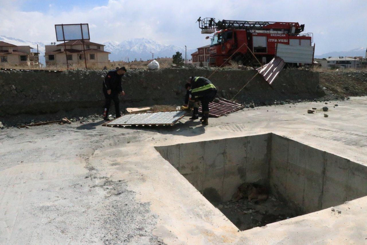 Vatandaşlar havlama seslerini duydu, Erzincan'da inşaat çukuruna düşen köpeği itfaiye ekipleri kurtardı