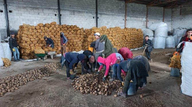 Bitlisli çiftçileri sevindiren haber! TMO'nun patates alımı açıklaması Bitlisli çiftçilerin yüzünü güldürdü