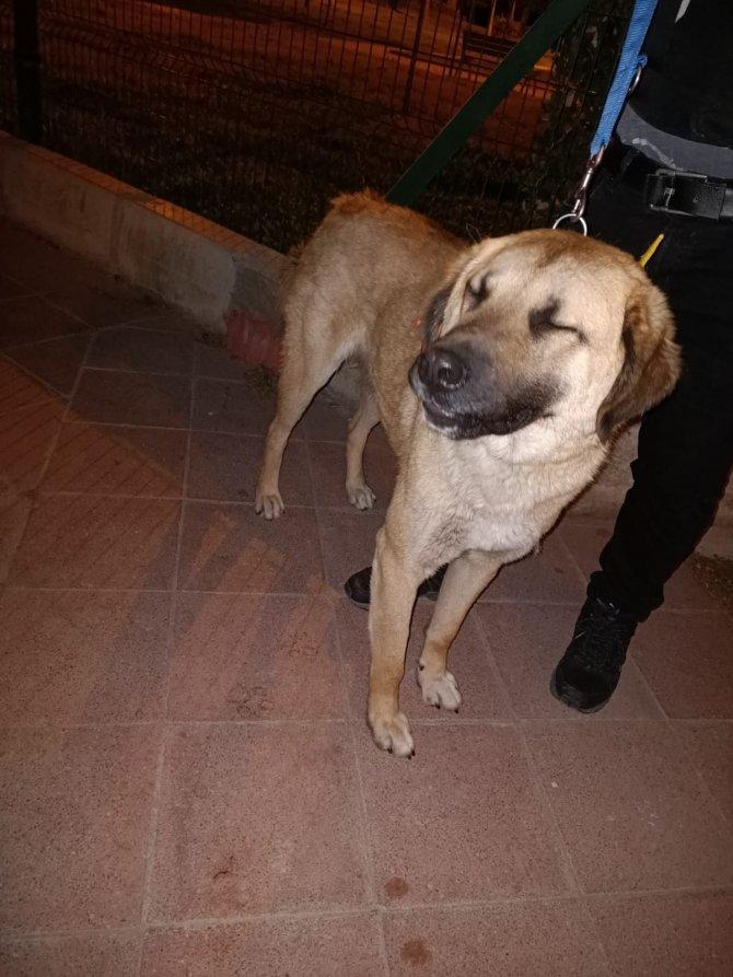İzmir'i toplu ulaşımla gezen köpek Sam hayvanseverler tarafından yaşam alanına geri gönderildi