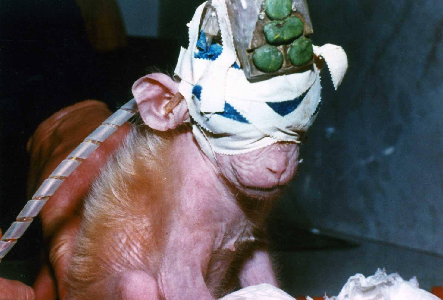 Save Ralph videosu sosyal medyada olay olmuştu: Mecliste 'hayvan deneyleri' için yeni düzenleme teklifi!