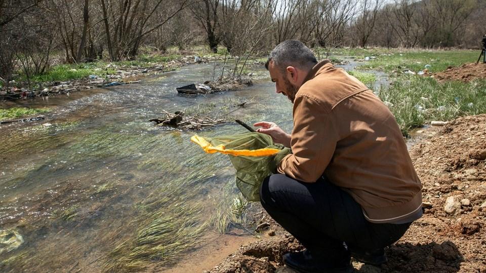 Kosova'da yeni bir böcek türü keşfedildi: Koronavirüs böceği!