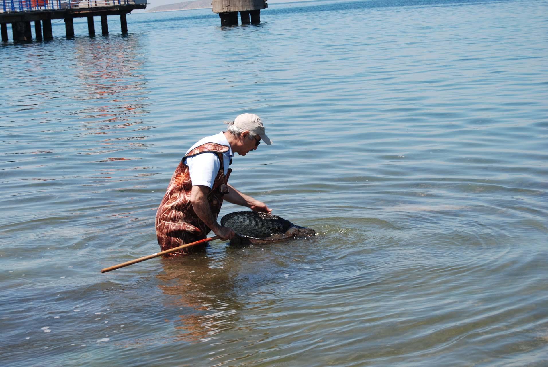 Deniz salyaları hakkındaki korkutan gerçek ortaya çıktı: Balıkların ölmesine neden oluyor