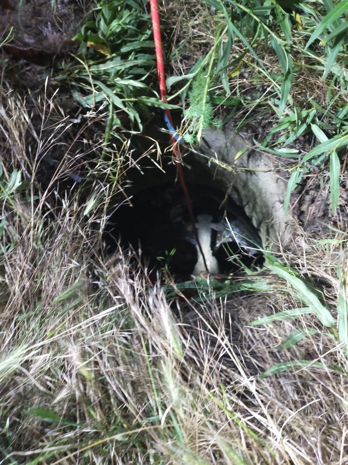 Yürekleri ısıtan kurtarma operasyonu! Kuyuda çaresizce kurtarılmayı beklediler! Kaplumbağa ve koyunların yardımına AFAD koştu