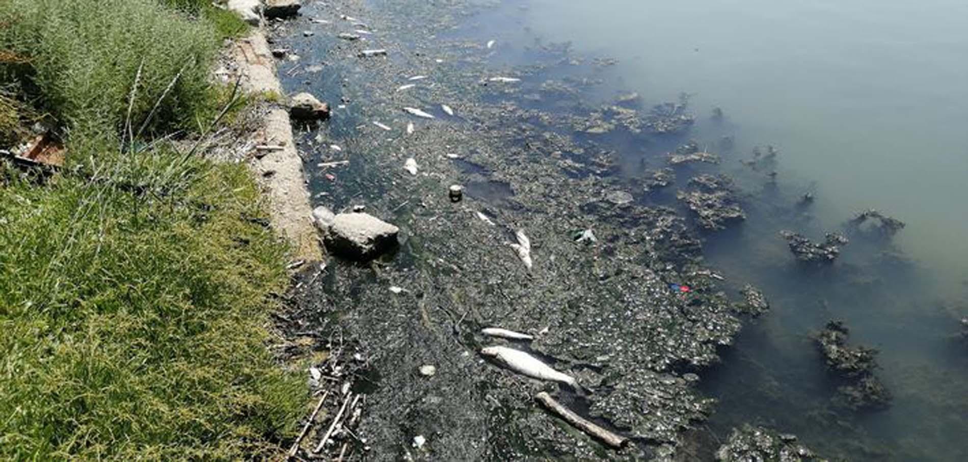 AK Parti İstanbul İl Başkanı Kabaktepe'den İBB'ye sert eleşti: İstanbul 2 yıldır büyük çaplı ekolojik felaketler yaşıyor