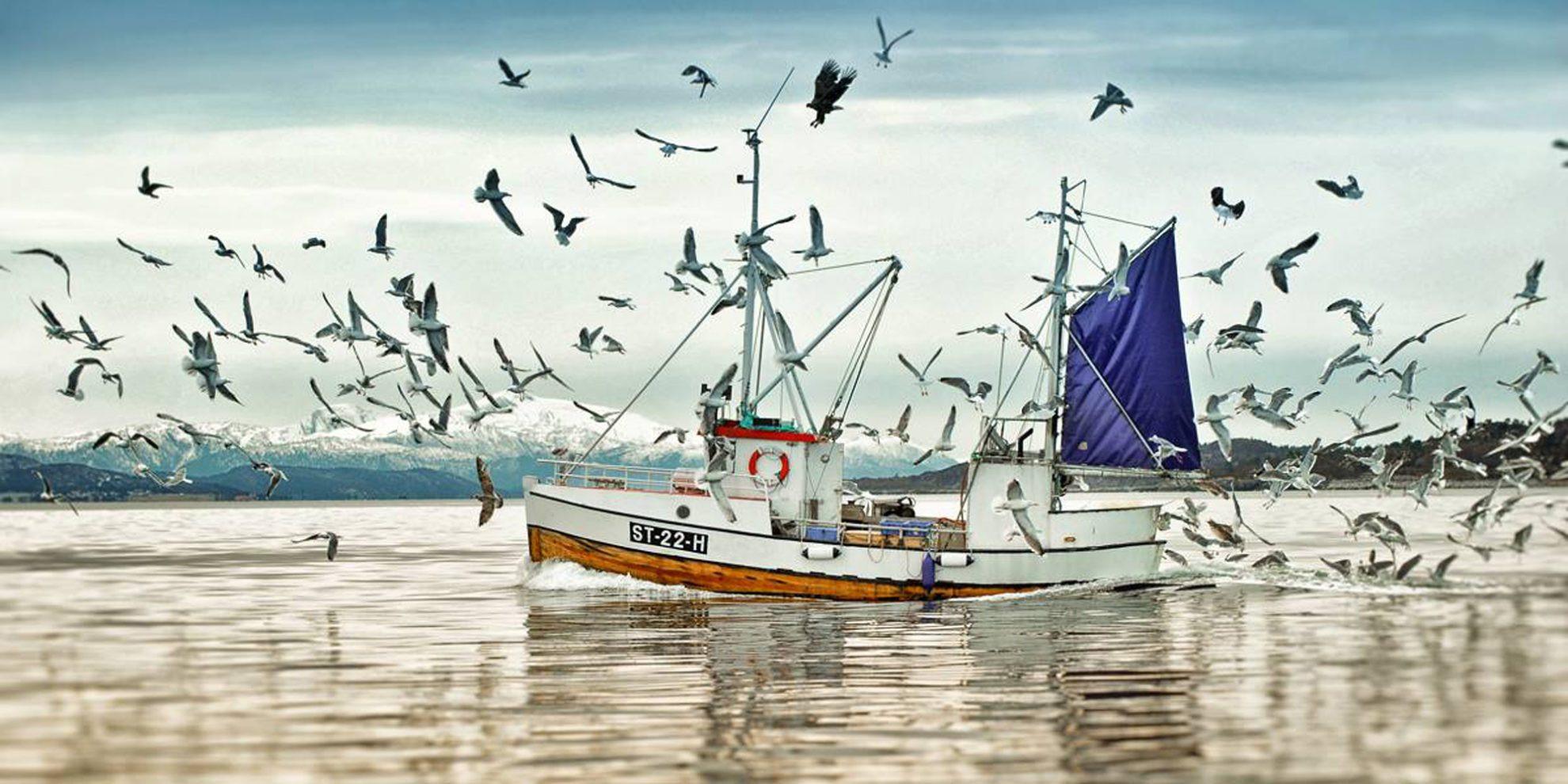 Ege ve Akdenizin korkulu rüyası olmuştu! Balon balığı ile mücadele için harekete geçildi