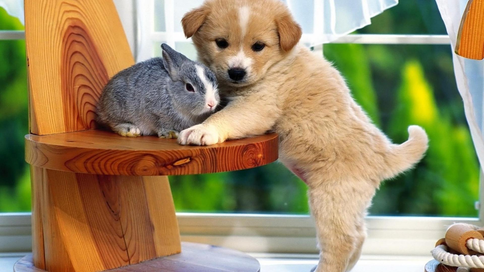 SON DAKİKA! AK Parti Grup Başkanvekili Mahir Ünal'dan Hayvan Hakları yasası açıklaması: Temel noktası cana zarar verme!