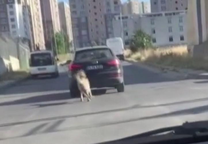 Dehşete düşüren olay! Köpeği kilometrelerce aracın peşinden koşturdu | Vicdansız sürücünün savunması pes dedirtti