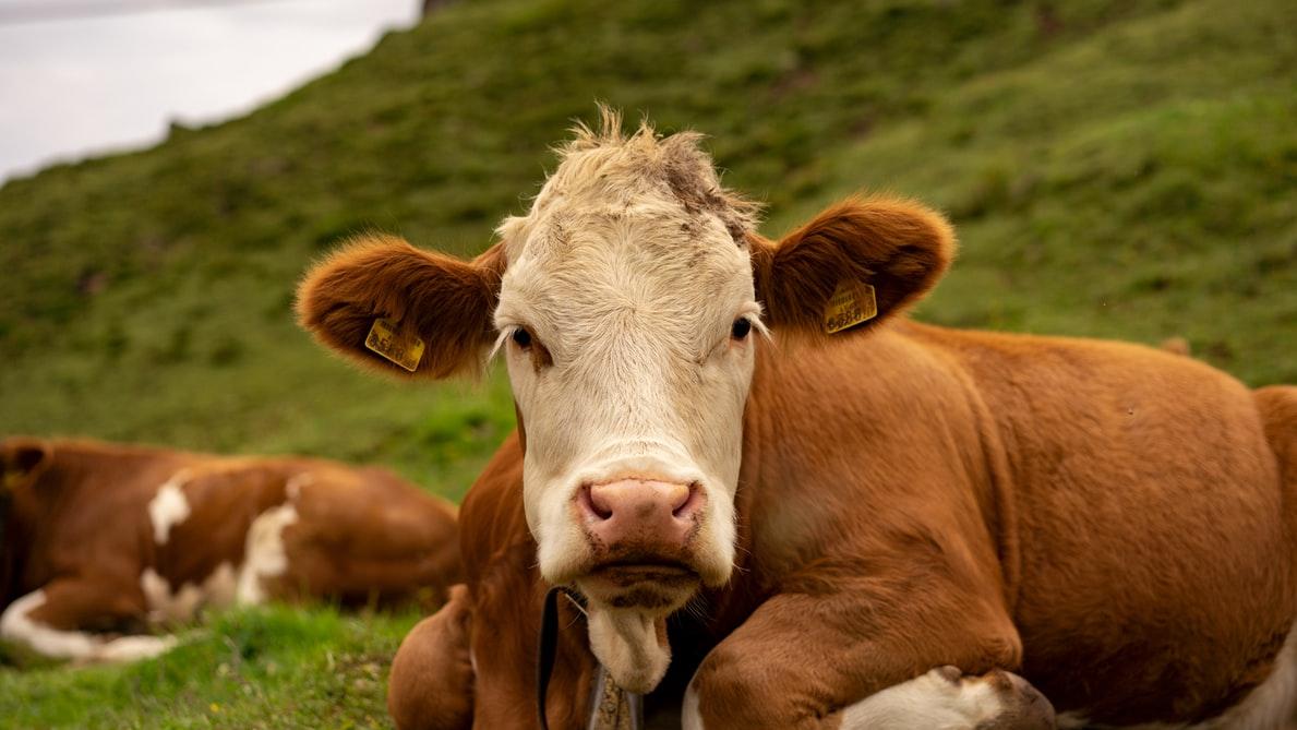 Kurban eti bağış kampanyası başladı! İhtiyaç sahibi ailelere kurban eti ulaştırılıyor