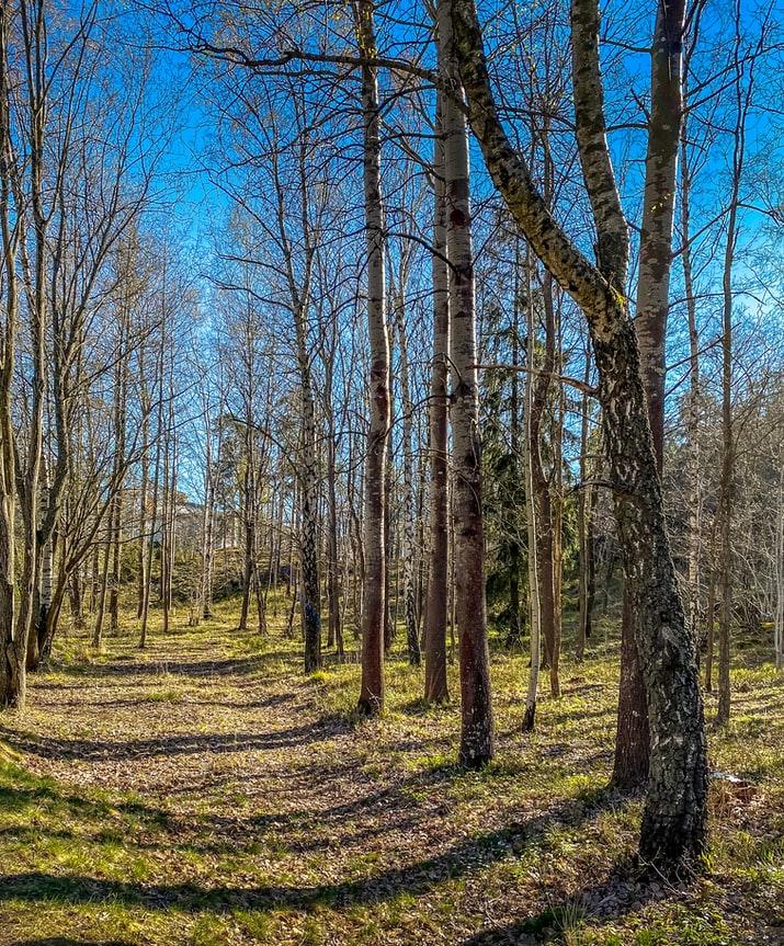 Yaz geldi, yasaklar kalktı, doğa özlemi sona erdi! Vatandaşlar doğa yürüyüşleri ile nefes aldı