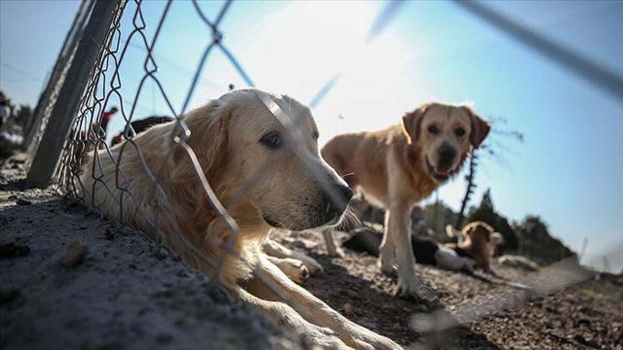 Hayvanları Koruma Kanunu TBMM'den geçti! Hayvanlara dokunanlara hapis cezası verilecek! İşte o maddeler...